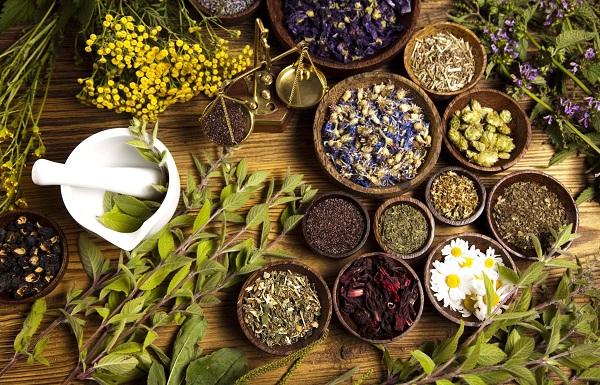 Почечные чаи при пиелонефрите