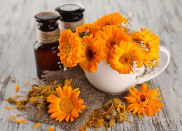 На фото – цветки календулы